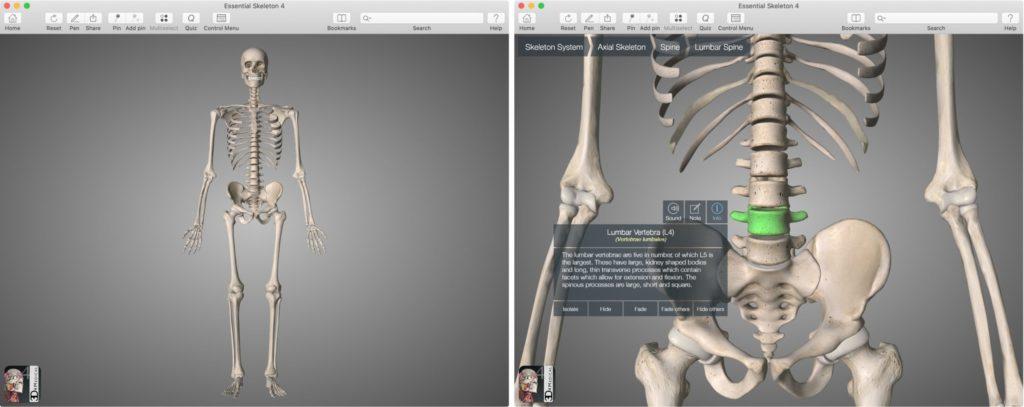 Приложение Essential Skeleton 4 для Mac